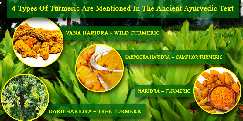 The Legends of Turmeric