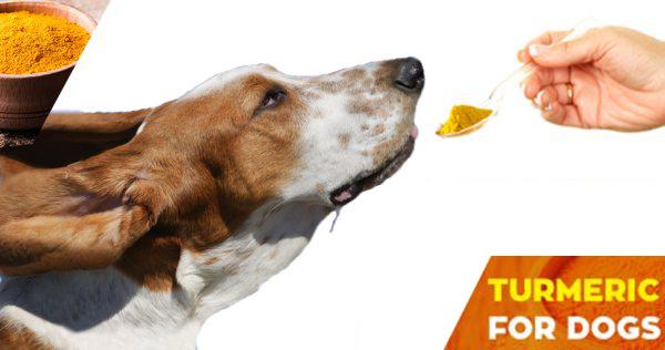 Maintain health of dogs barkumin