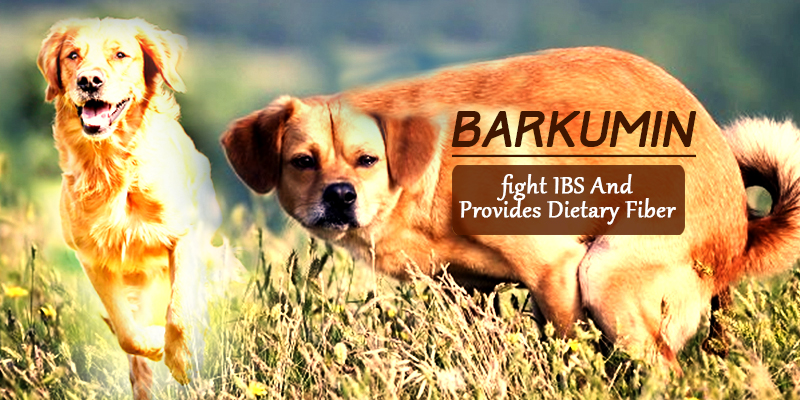 Irritable bowel syndrome treatment in dogs with barkumin