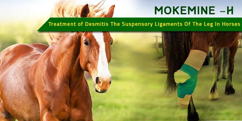 Mokemine-H for Desmitis in horses