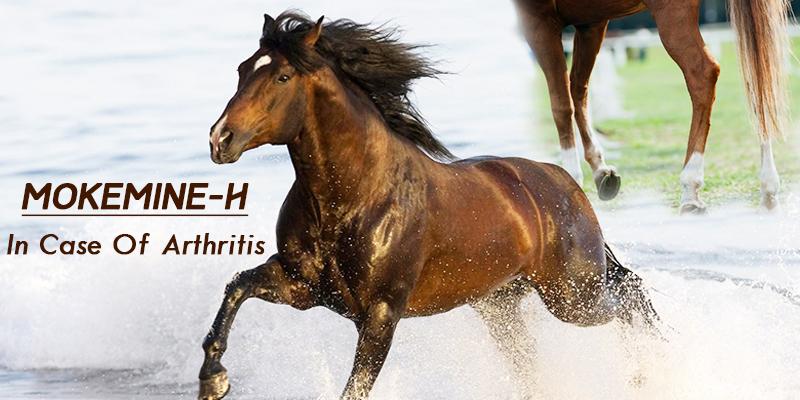 Mokemine-H best for your horse health