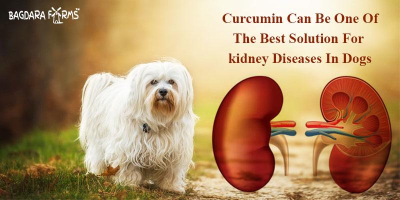 barkumin for dogs health