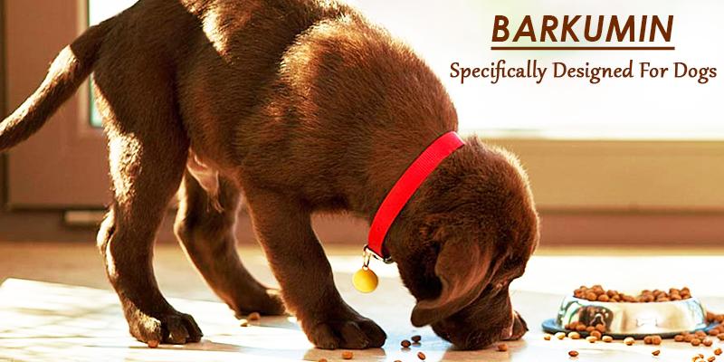 keep your dog healthy with barkumin