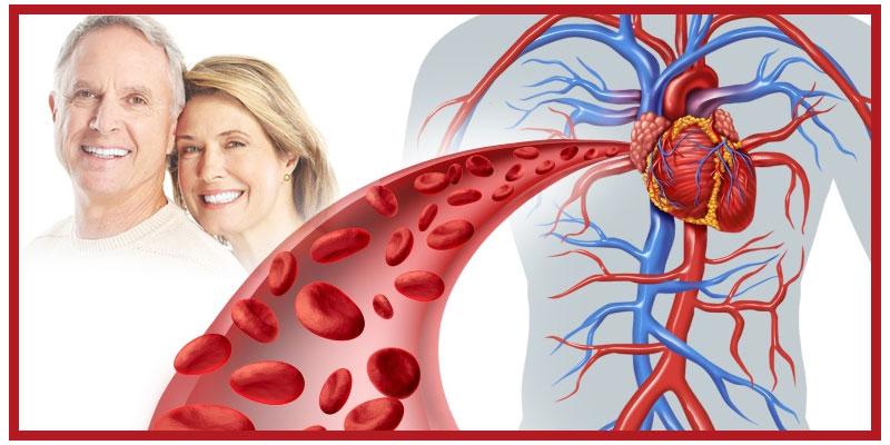 Artemin to clean arteries